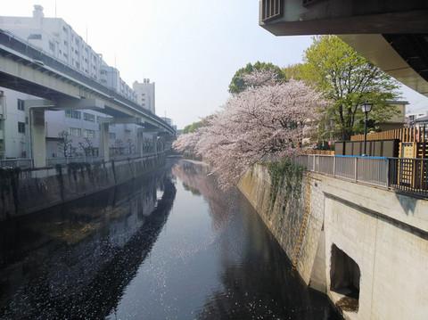Sakura9