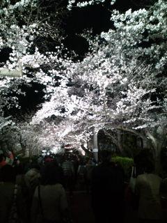 神戸桜スペシャル
