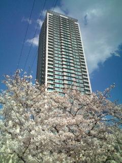 桜と芸術センター