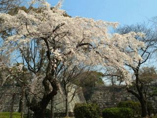 桜の花に桃の花
